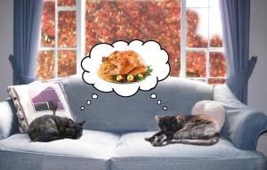 cats turkey