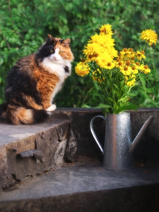 The cat sits on the stairs next to a bouquet of yellow flowers