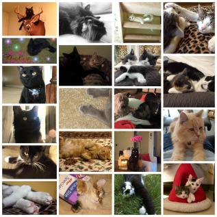 Fancy Paws Giveaway Collage