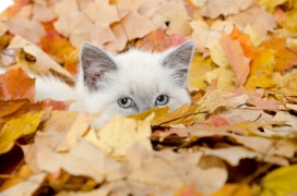 Cute kitten hiding in leaves